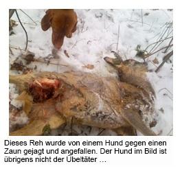 schreit ein hund bevor er stirbt